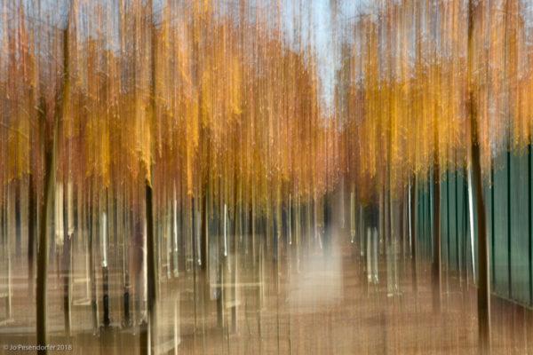 2luco automne